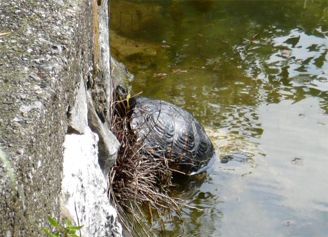 Leggi argomento foto naturalistiche for Lago per tartarughe