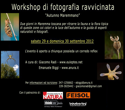 eventi parma 30 settembre 2012 - photo#39