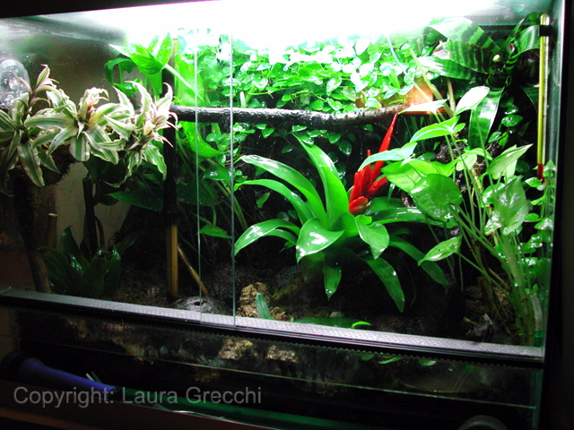 Piante da terrario for Piante per acquario online